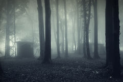 House in a foggy fores. House hidden in a dark forest with fog Royalty Free Stock Photos