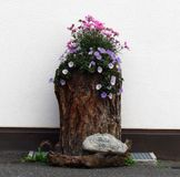 House Garden. Beautiful Flowers of the Garden stock photos