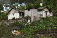 House with Garden in Central Ecuador Royalty Free Stock Photos