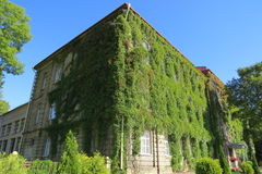 House and grapes. The house is covered with grapes under the sky Royalty Free Stock Image