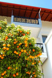 House at the Greek village and orange tree with fruits Royalty Free Stock Photos