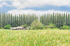 House on green field landscape Stock Photography