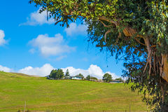 House on a green hill Royalty Free Stock Images