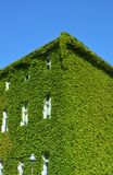 House with Green Walls Stock Photo