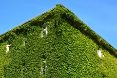House with Green Walls Royalty Free Stock Photo