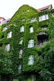 House with Green Walls. Urban house with walls covered with natural green plants stock image