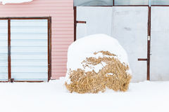 House and hay on the farm. Winter in the village royalty free stock photo