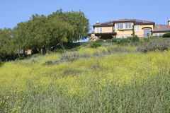 House on a Hill. House set on a hill with Mustard Plants in the foreground Royalty Free Stock Images