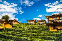 House on hill with tea plantation nature background Stock Photos