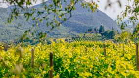 House on hills among rows of grapevines in vineyard near Padua, Italy stock images