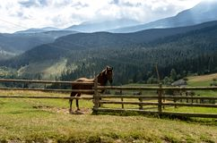 A house horse is behind a fence. Horse in the mountains. The horse is in the center of the frame Stock Photos