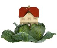 House In Cabbage On White Stock Images