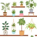 House indoor vector plants and nature homemade flowers in pot interior decoration houseplant natural tree flowerpot Stock Photo