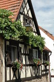 House and ivy. Half timbered house and ivy in Hambach, Germany Royalty Free Stock Photo
