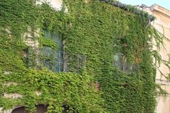 House with ivy,  South of France Stock Photo