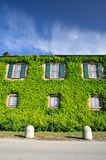 House with ivy Stock Photo