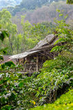 House in the jungle forest Stock Image