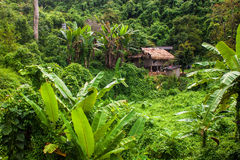 House in a jungle Stock Photo