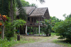 The house in the jungle. Wooden house lost in the jungle stock photo