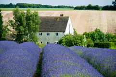House with lavender Stock Photos