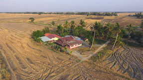 A house in a middle of dry paddy fields Royalty Free Stock Photo