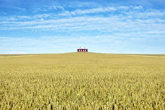 House in the middle of a field of wheat Stock Photography