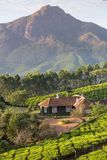 House in the middle of tea plantations in Munnar Stock Image