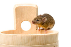 House mouse (Mus musculus) on tub Stock Photos