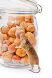 House mouse near walnut and corn jar Stock Images
