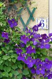 House number 6 & purple flowers Stock Photo