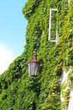 House with old street lamp and opened window covered in ivy Royalty Free Stock Images