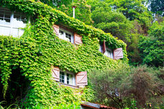 House overgrown with ivy Royalty Free Stock Photography