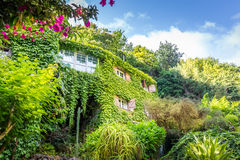 House overgrown with ivy Royalty Free Stock Photo