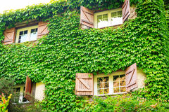House overgrown with ivy Stock Photo