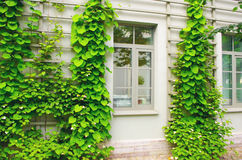 House overgrown plants. And leaves Royalty Free Stock Images
