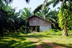 House in the Palm Garden Royalty Free Stock Images