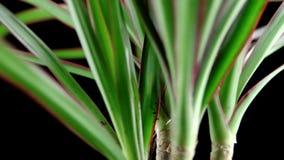 House Palm Rotation stock video footage