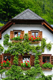House with pear tree Royalty Free Stock Photos