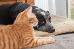 House pets hanging together Stock Image