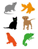 House pets. Little pets or animals. Illustration Royalty Free Stock Image