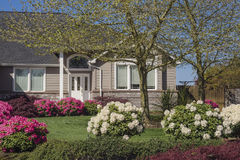 House with pink and white rhododendrons. Rows of pink and white rhododendrons landscape the front of a contemporary house in Oregon Royalty Free Stock Photos