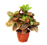 House plant Stock Images