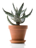 House Plant - Aloe Stock Image