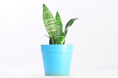 House Plant stock photos