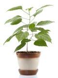 House plant Stock Image