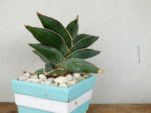 House plant collection in small flowerpots on wood background texture Stock Images