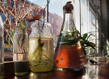 House Plant Cuttings Rooting. Cuttings from common indoor house plants growing roots in water in assorted glass bottles and jars Stock Image