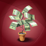 House plant with dollars leafes Stock Image