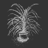 House plant in flower pot isolated on dark gray background. Stock Image