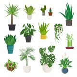 House plant and flowers in pots. Raster version. Set of house plant and flowers in pots on white background. Raster version vector illustration